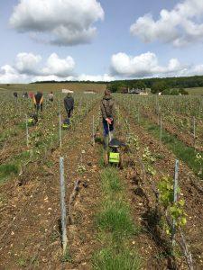 Région Grand Est : une visite au vignoble Taittinger constructive et positive.